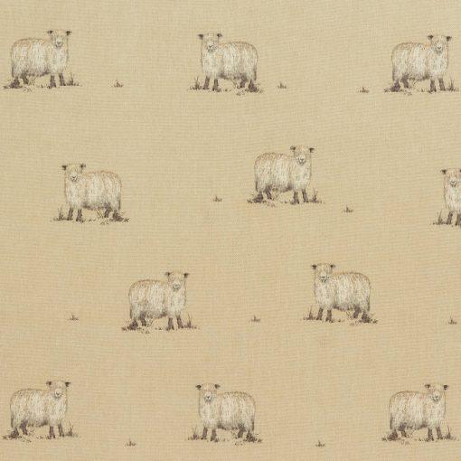sandringham sheep