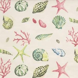 seashells vintage